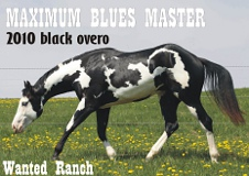 Maximum Blues Master Wanted Ranch